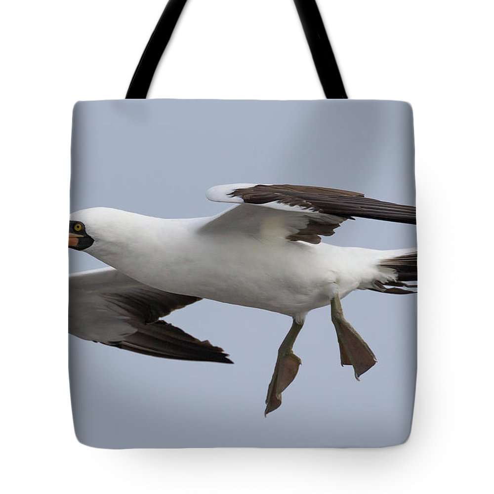 Nazca Booby Tote Bag featuring the photograph Nazca Booby by Glenn Lahde