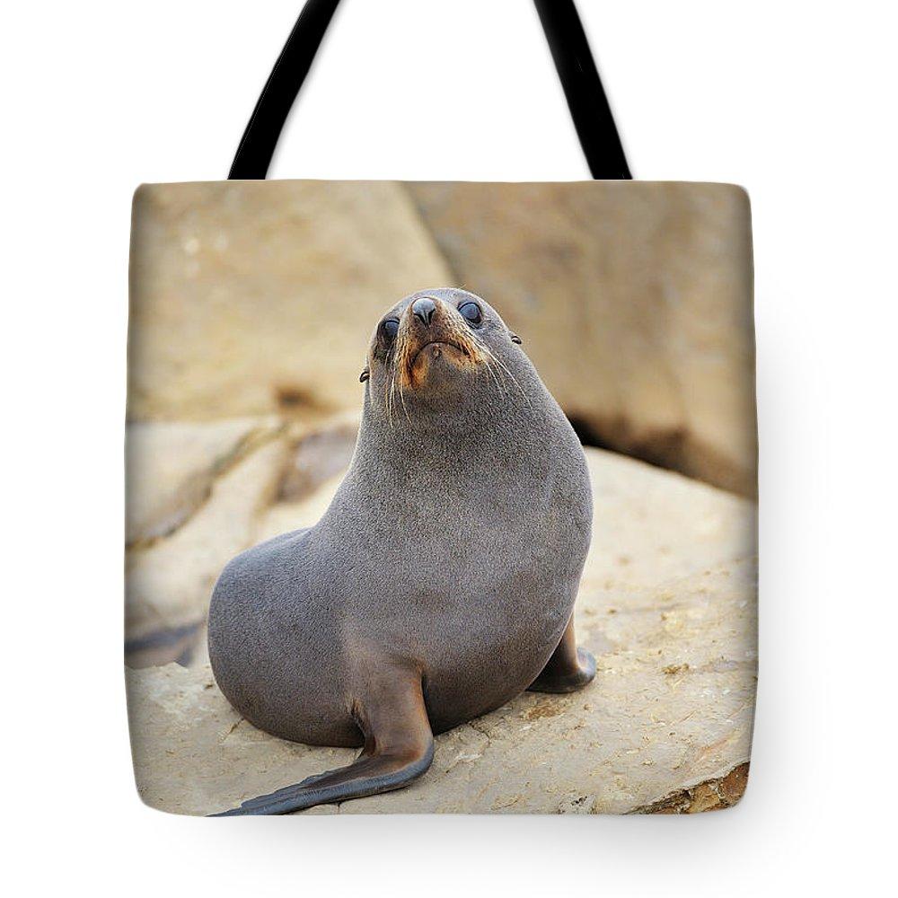 Alertness Tote Bag featuring the photograph New Zealand Fur Seal, Arctocephalus by Raimund Linke