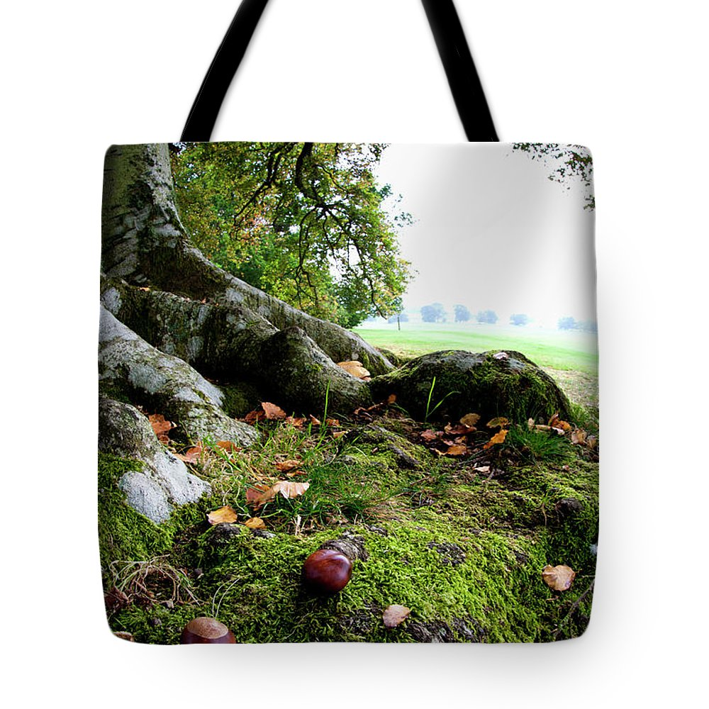 Nut Tote Bag featuring the photograph Nuts And Fallen Leaves At The Foot Of A by John Short / Design Pics