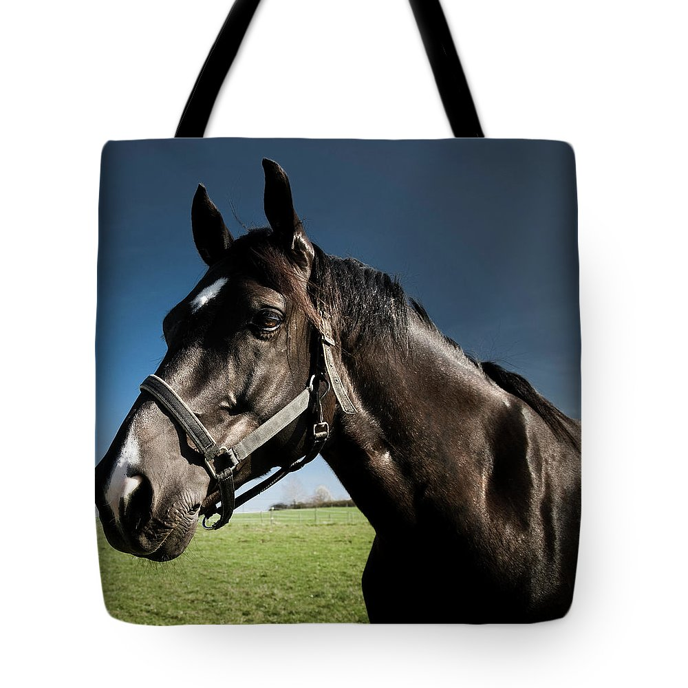 Horse Tote Bag featuring the photograph On The Meadow by Pixalot
