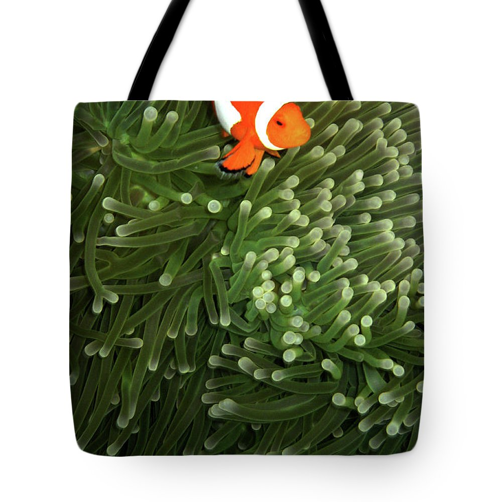 Underwater Tote Bag featuring the photograph Orange Fish With Yellow Stripe by Perry L Aragon
