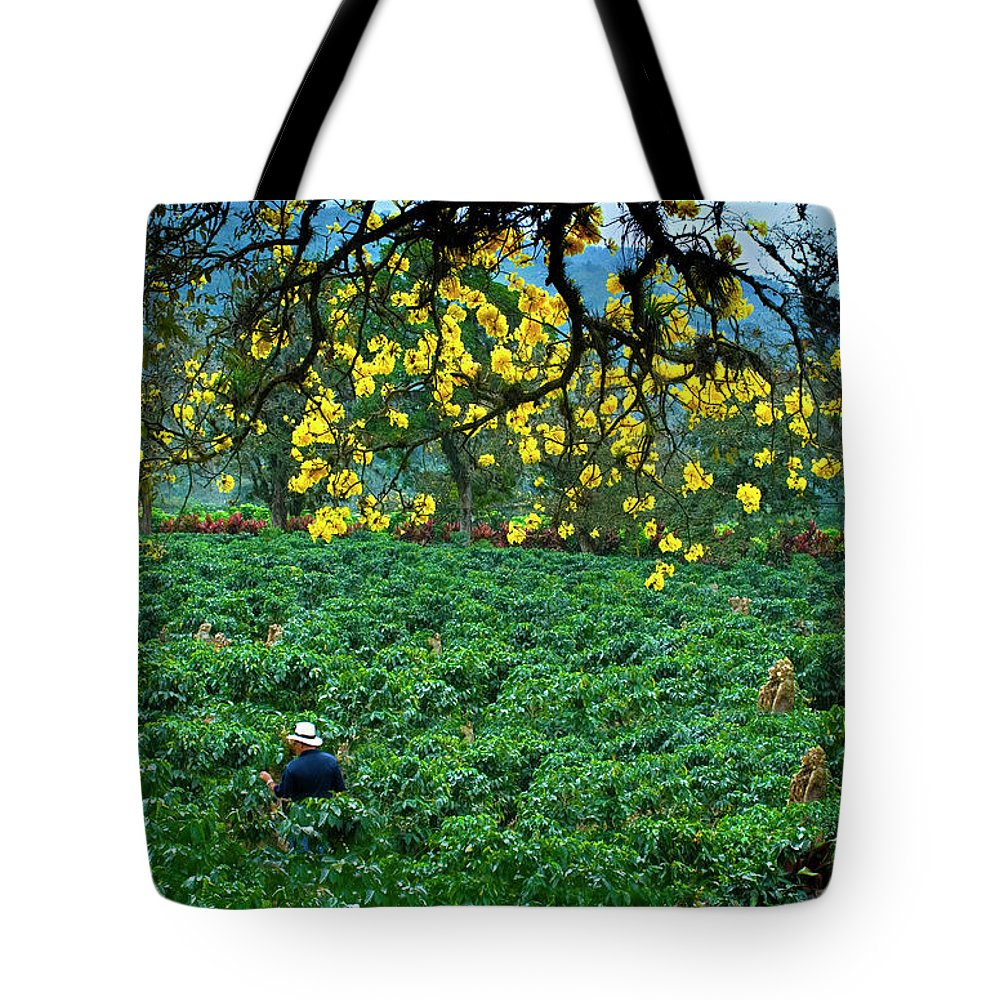 Expertise Tote Bag featuring the photograph Orosi Valley by John Coletti