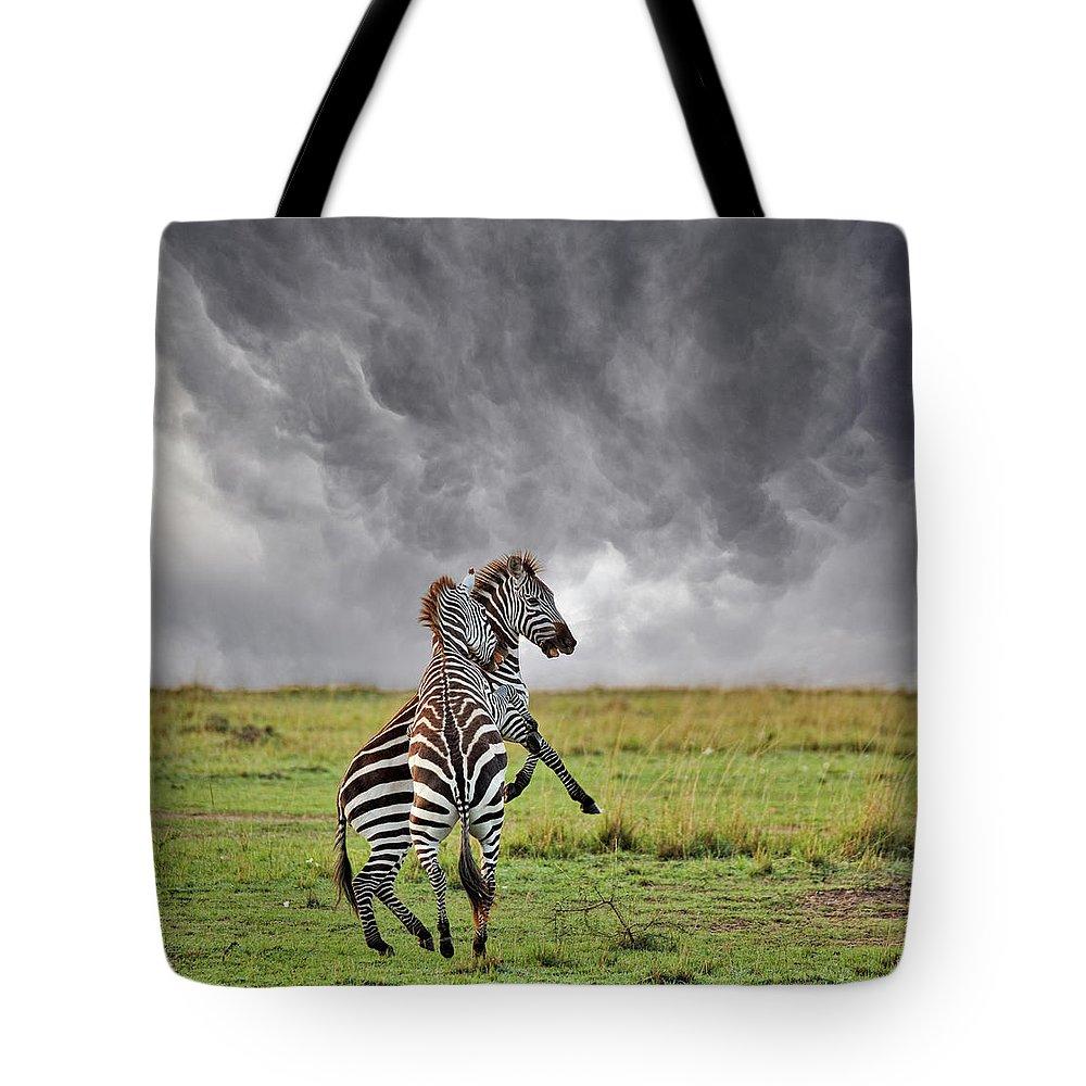 Kenya Tote Bag featuring the photograph Pair Of Burchells Zebras Fighting by Adam Jones