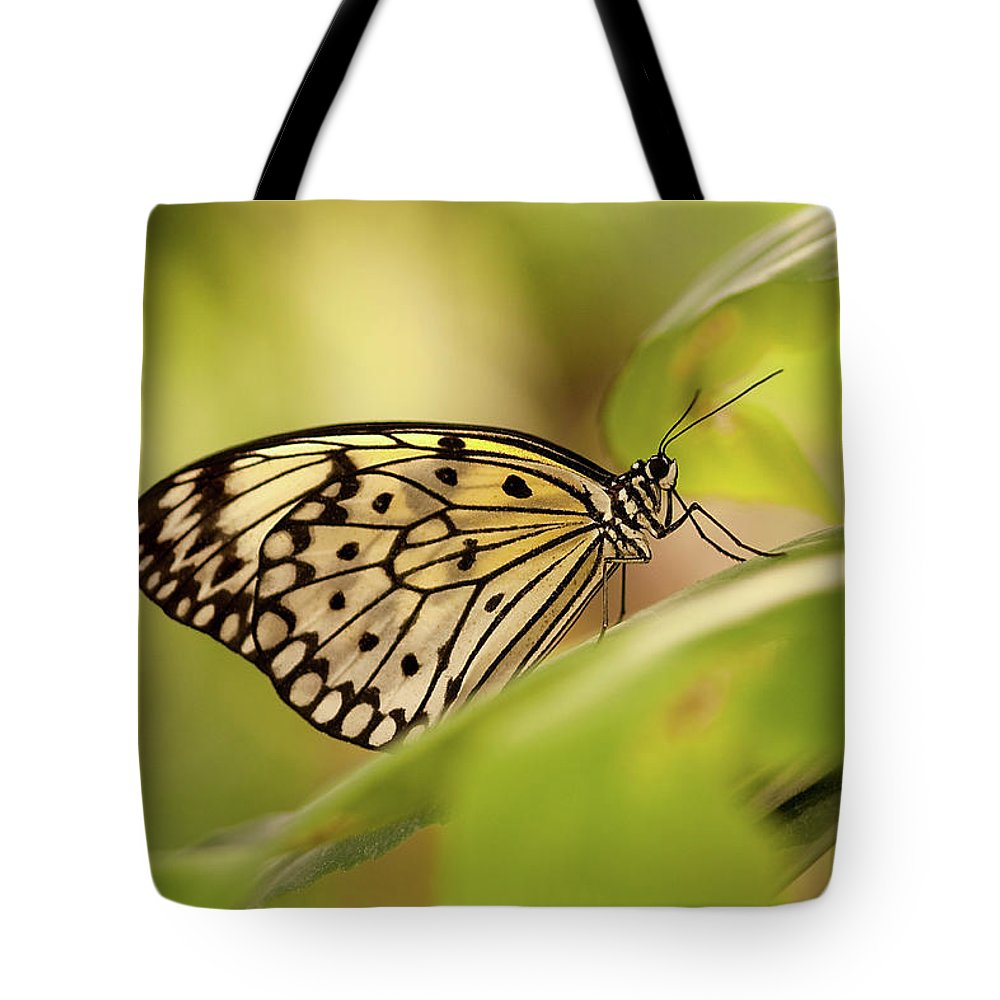 Natural Pattern Tote Bag featuring the photograph Paper Kite Butterfly by Photos By Jay Bee