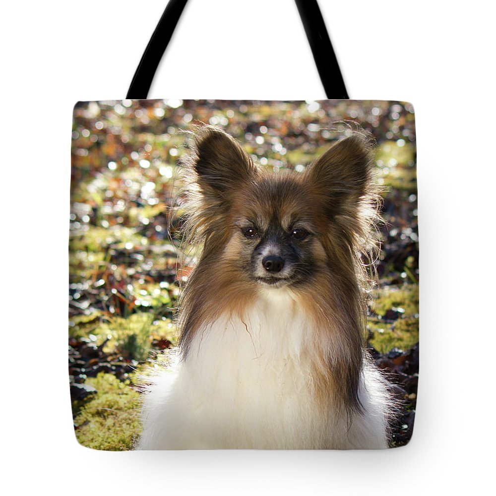 Papillon Tote Bag featuring the photograph Papillon Sitting In Leaves by Donna Anderson