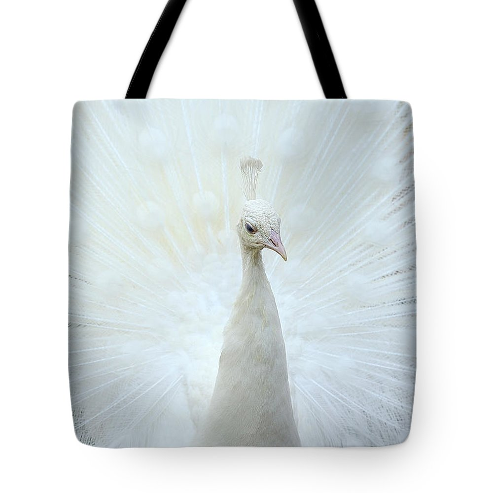Indian Peafowl Tote Bag featuring the photograph Pavone by Marco Pozzi Photographer