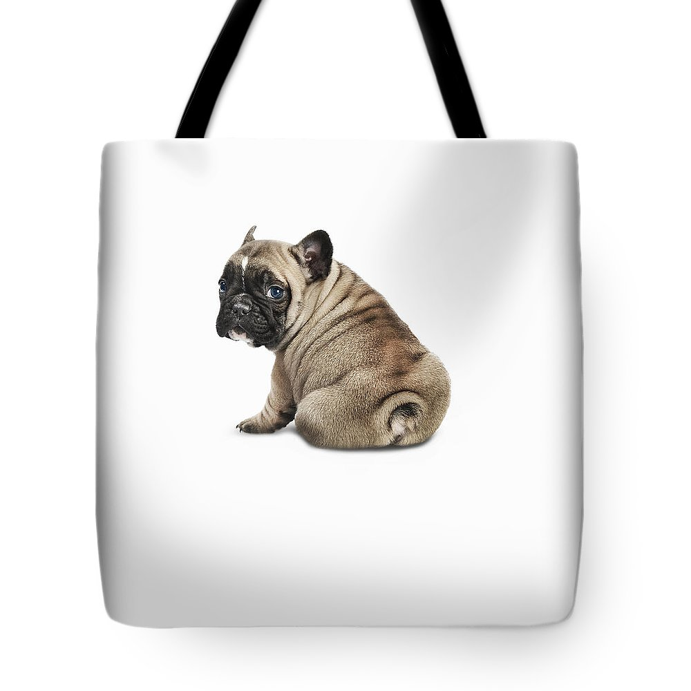 Pets Tote Bag featuring the photograph Pedigree French Bulldog Against A White by Andrew Bret Wallis