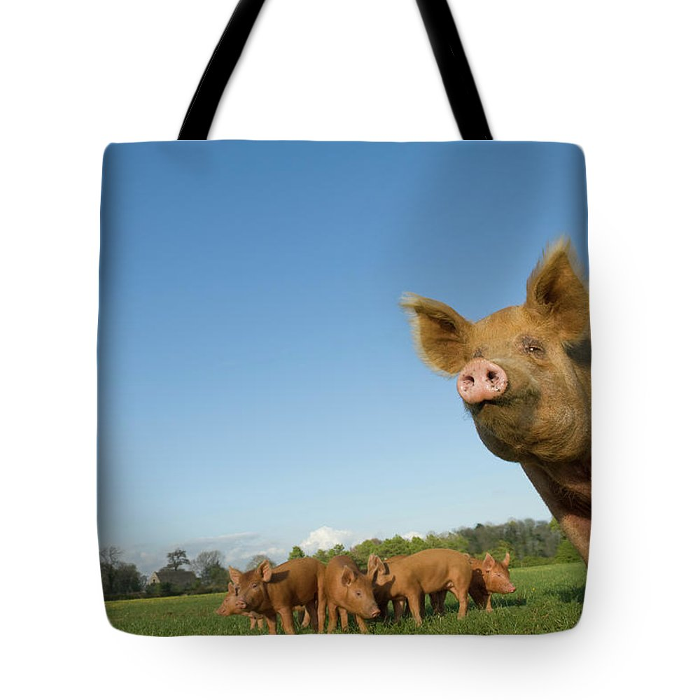 Pig Tote Bag featuring the photograph Pig In Field by Henry Arden