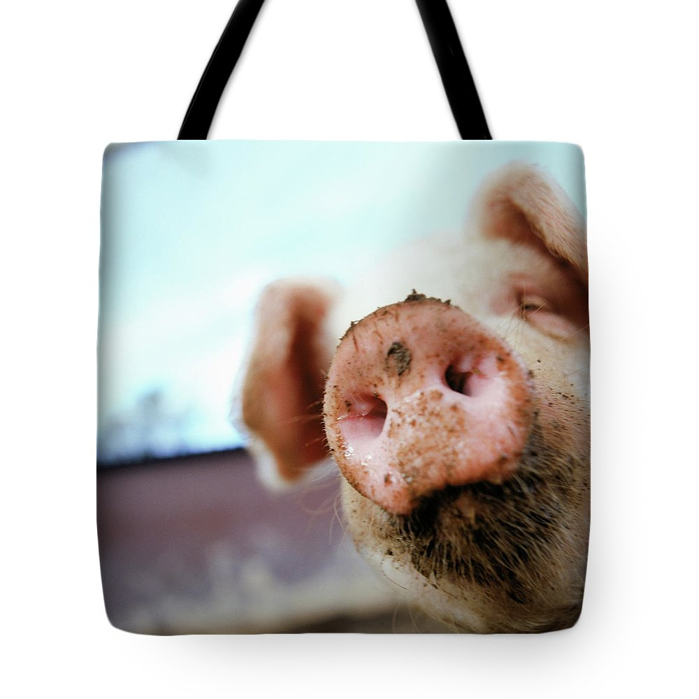 Pig Tote Bag featuring the photograph Pig by Matt Carr