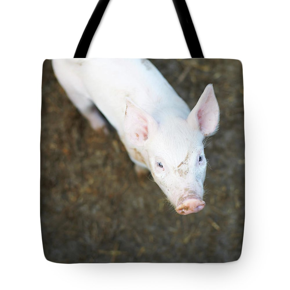 Pig Tote Bag featuring the photograph Pig Standing In Dirt Field by Peter Muller