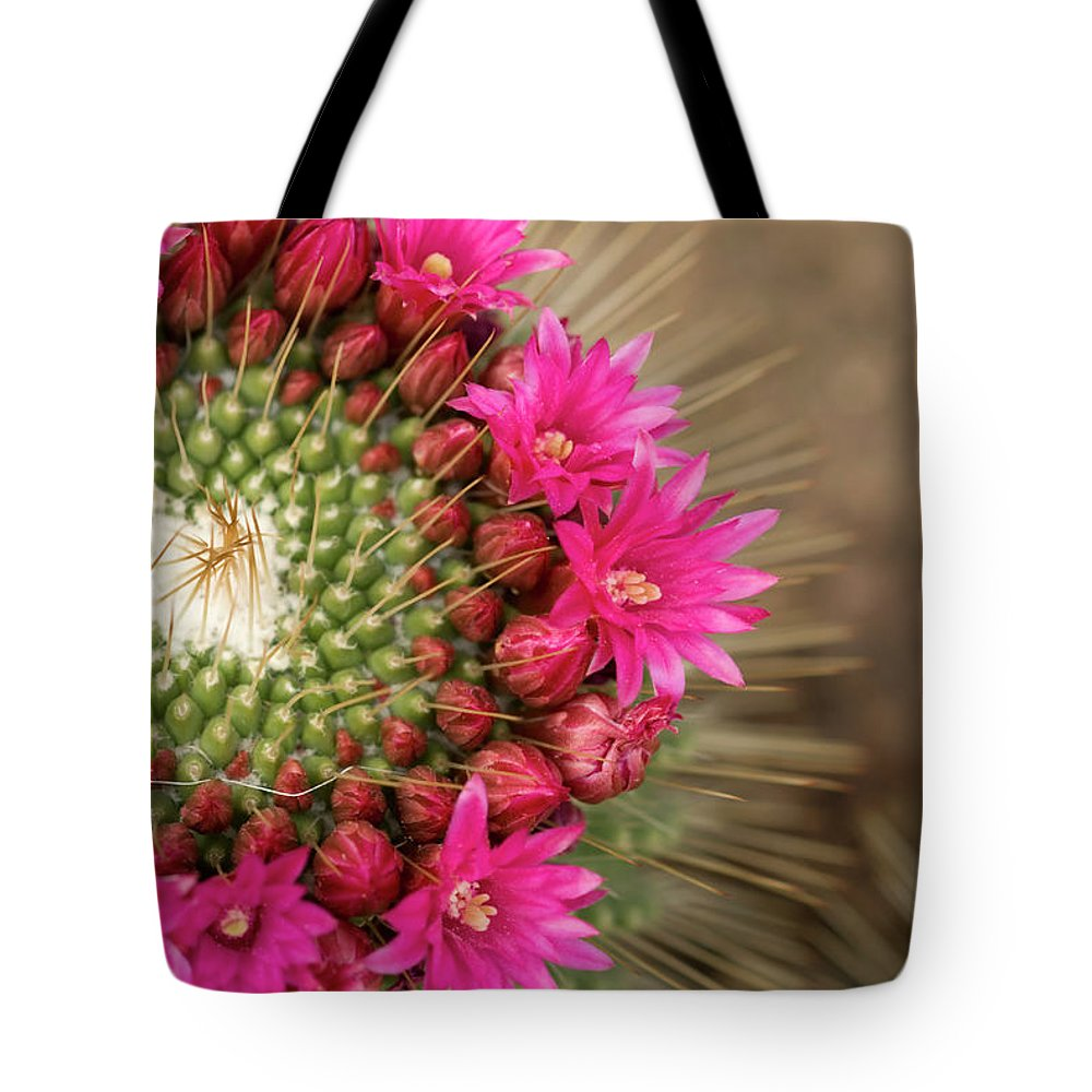 Bud Tote Bag featuring the photograph Pink Cactus Flower In Full Bloom by Zepperwing