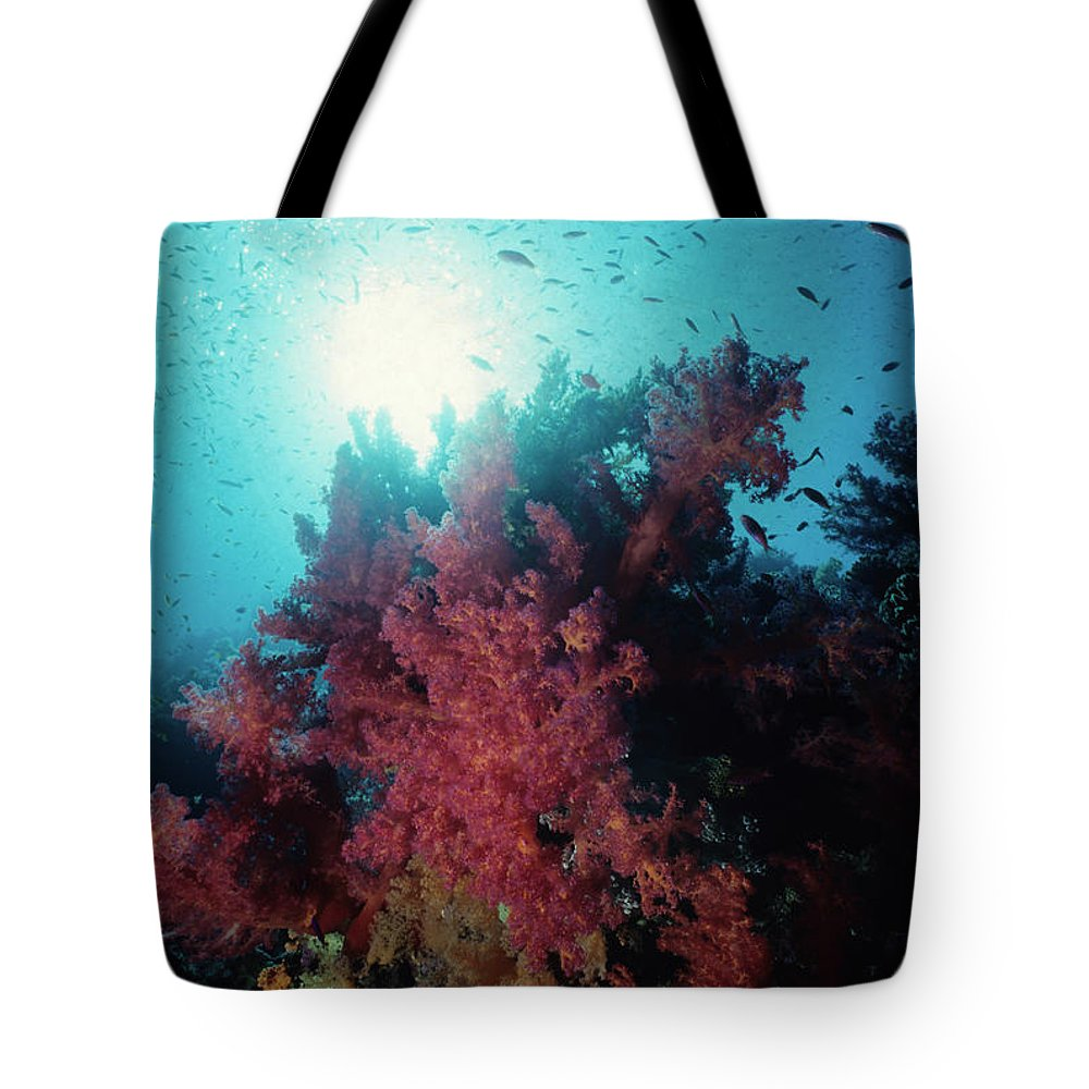 Underwater Tote Bag featuring the photograph Pink Soft Coral And Anthias by Tammy616