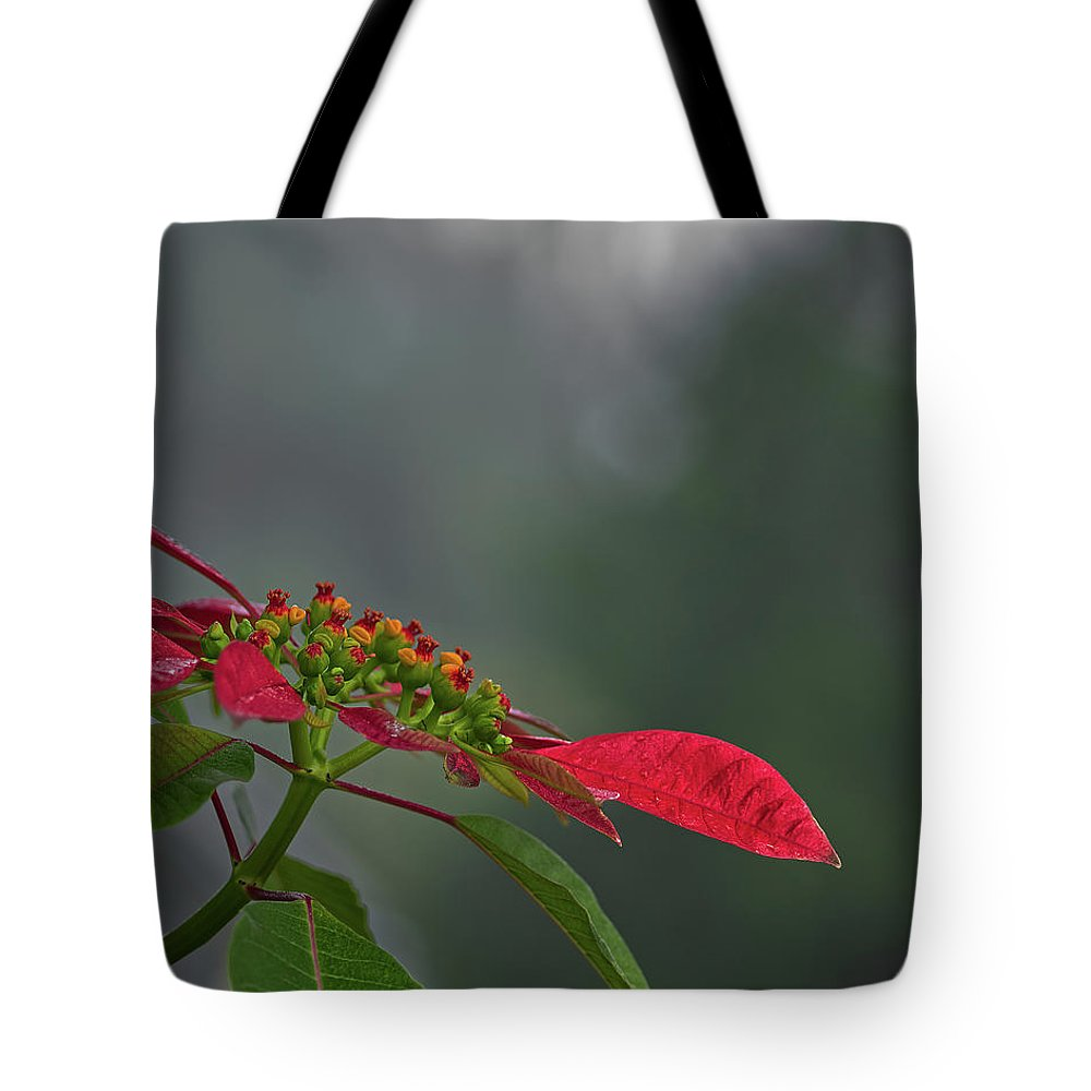 Nature Tote Bag featuring the photograph Poinsettia by Richard Rizzo