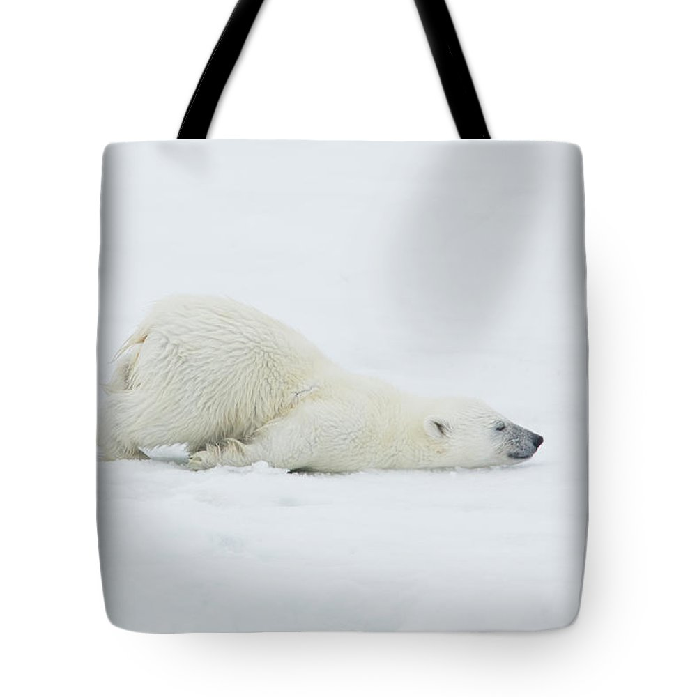 Svalbard Islands Tote Bag featuring the photograph Polar Bear Cub Stretching Out On Ice by Darrell Gulin