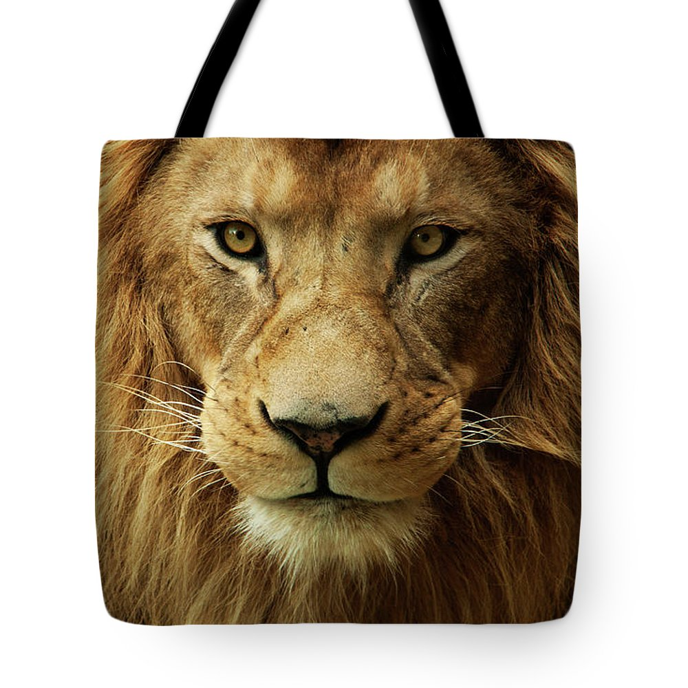 Animal Themes Tote Bag featuring the photograph Portrait Male African Lion by Brit Finucci