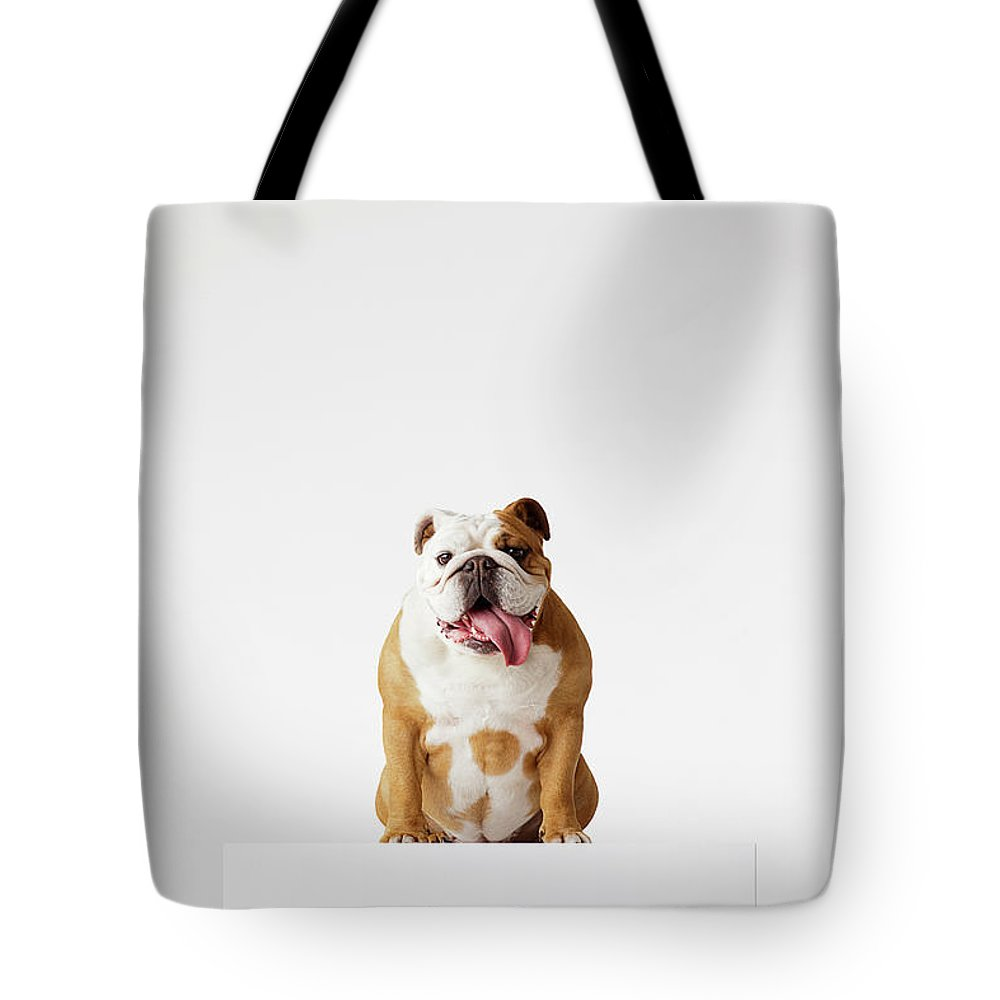 Pets Tote Bag featuring the photograph Portrait Of British Bulldog Sitting by Compassionate Eye Foundation/david Leahy