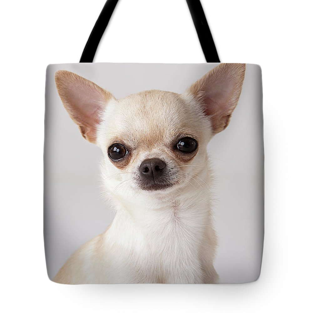 Pets Tote Bag featuring the photograph Portrait Of Chihuahua by Compassionate Eye Foundation/david Leahy