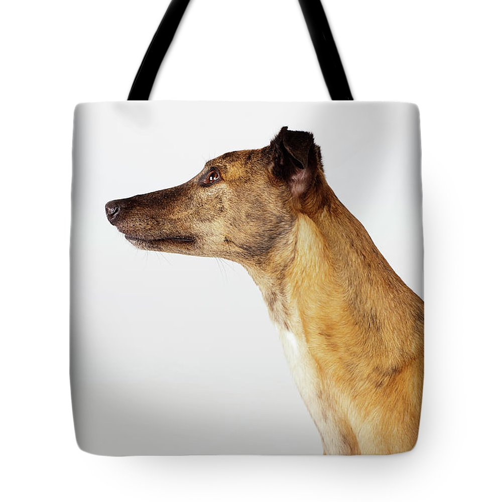Pets Tote Bag featuring the photograph Portrait Of Greyhound, Side View by Compassionate Eye Foundation/david Leahy
