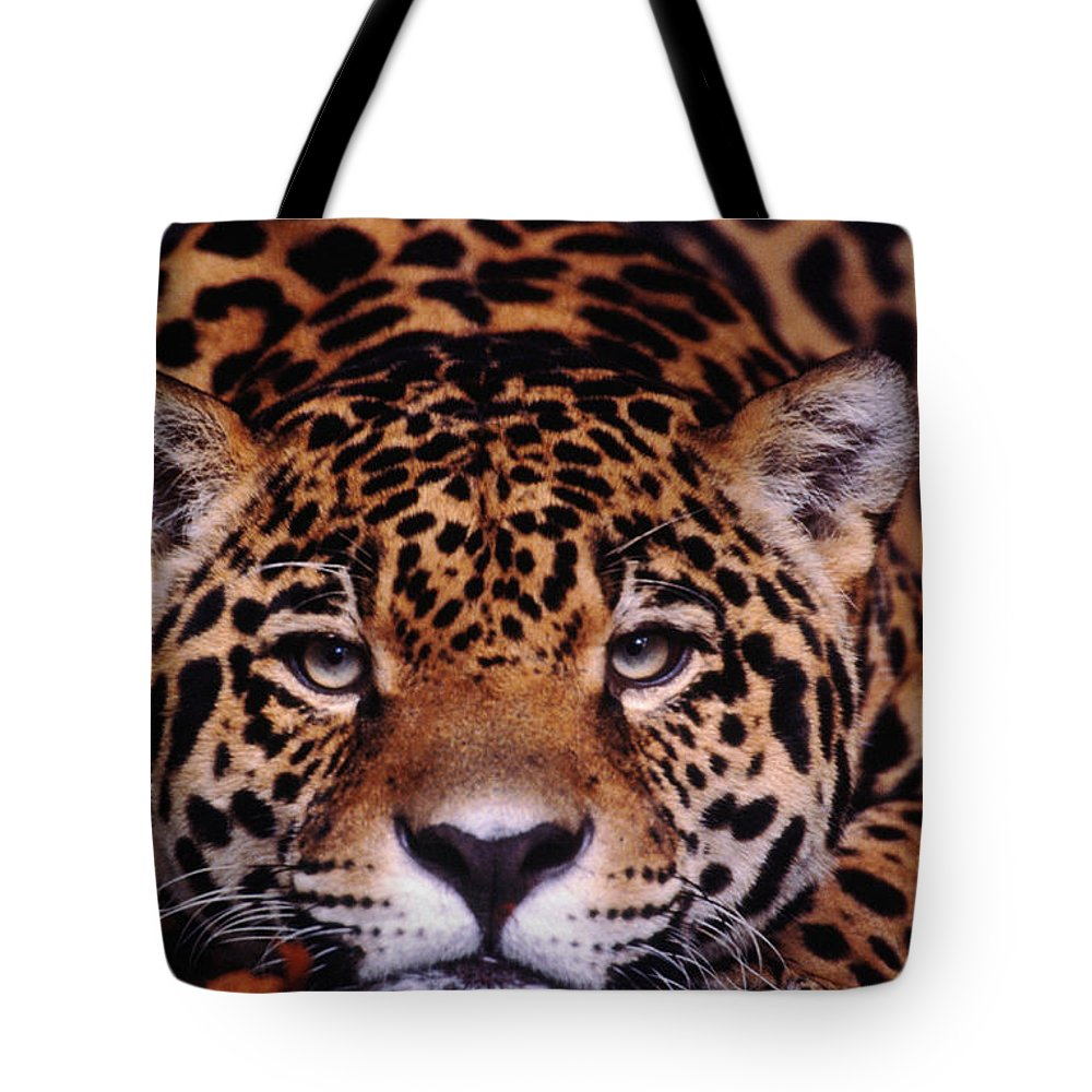 Latin America Tote Bag featuring the photograph Portrait Of Jaguar, Brazil by Mark Newman