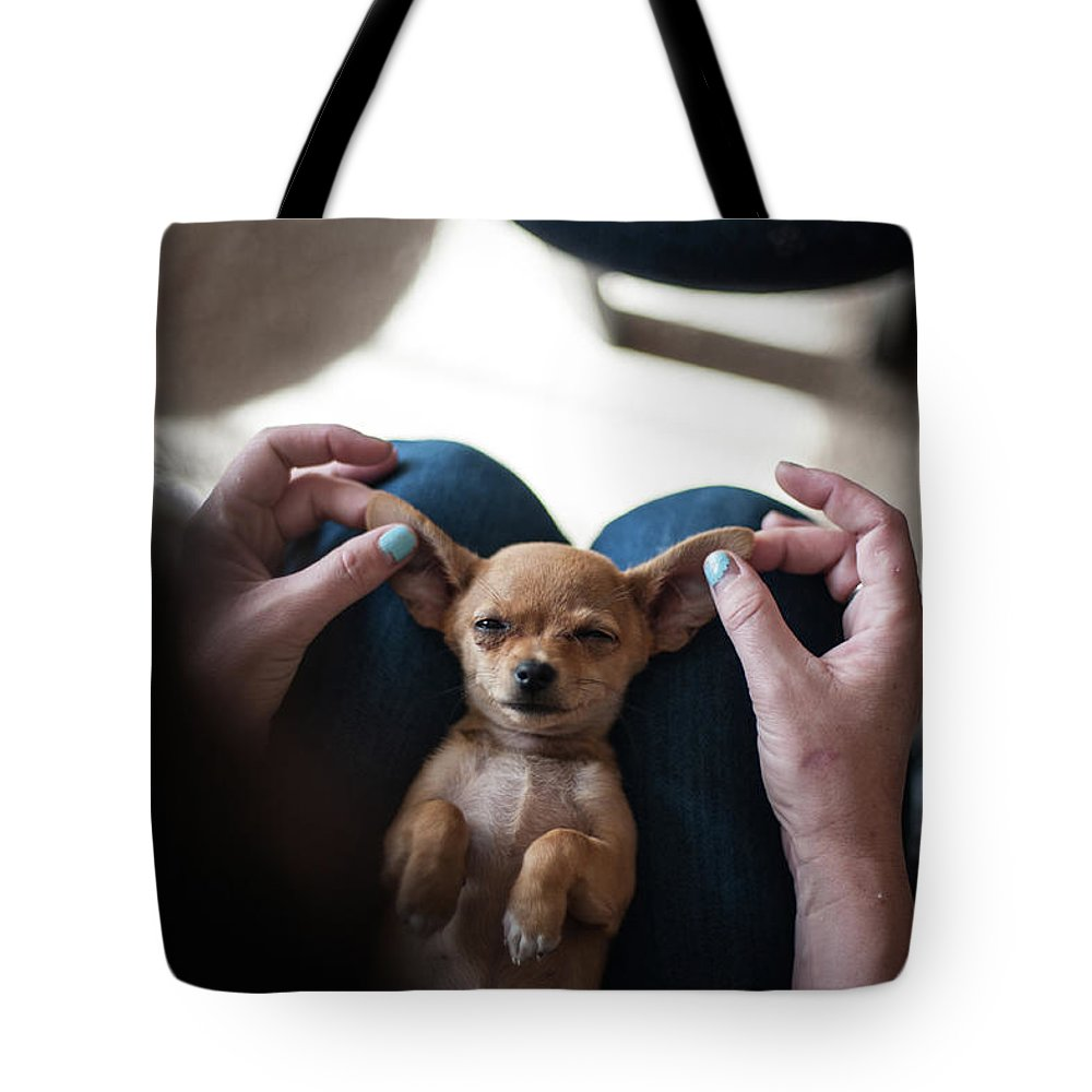 Pets Tote Bag featuring the photograph Pov - Pets by Jono Winnel