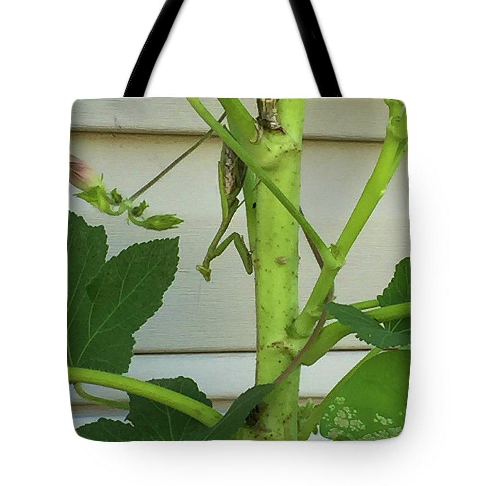 Praying Mantis Tote Bag featuring the photograph Praying Mantis by Marsha McAlexander