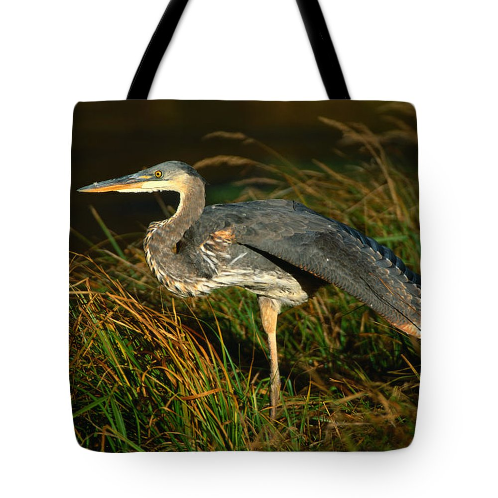 Grass Tote Bag featuring the photograph Profile Of Great Blue Heron by Lonely Planet