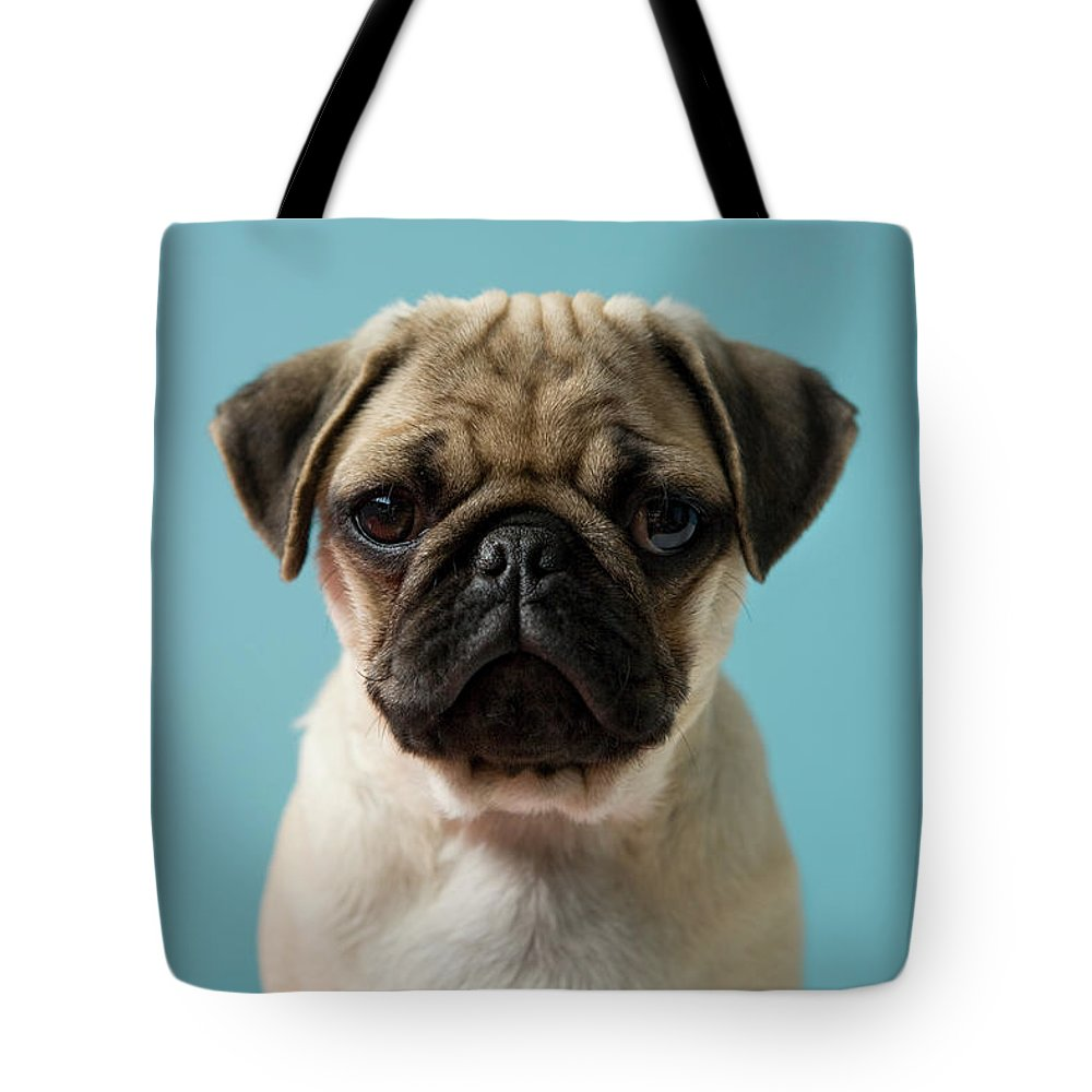 Pets Tote Bag featuring the photograph Pug Puppy Against Blue Background by Reggie Casagrande