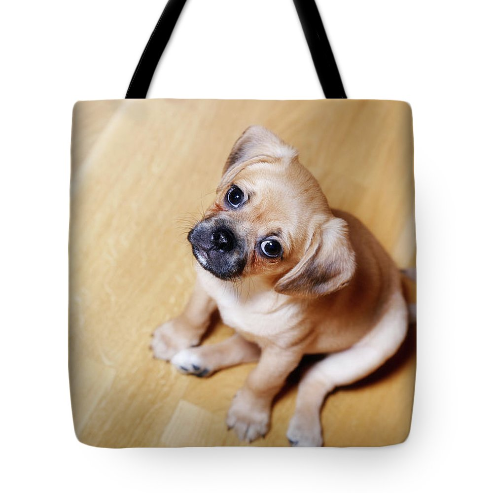 Pets Tote Bag featuring the photograph Pugalier Puppy Sitting Down by Juliet White
