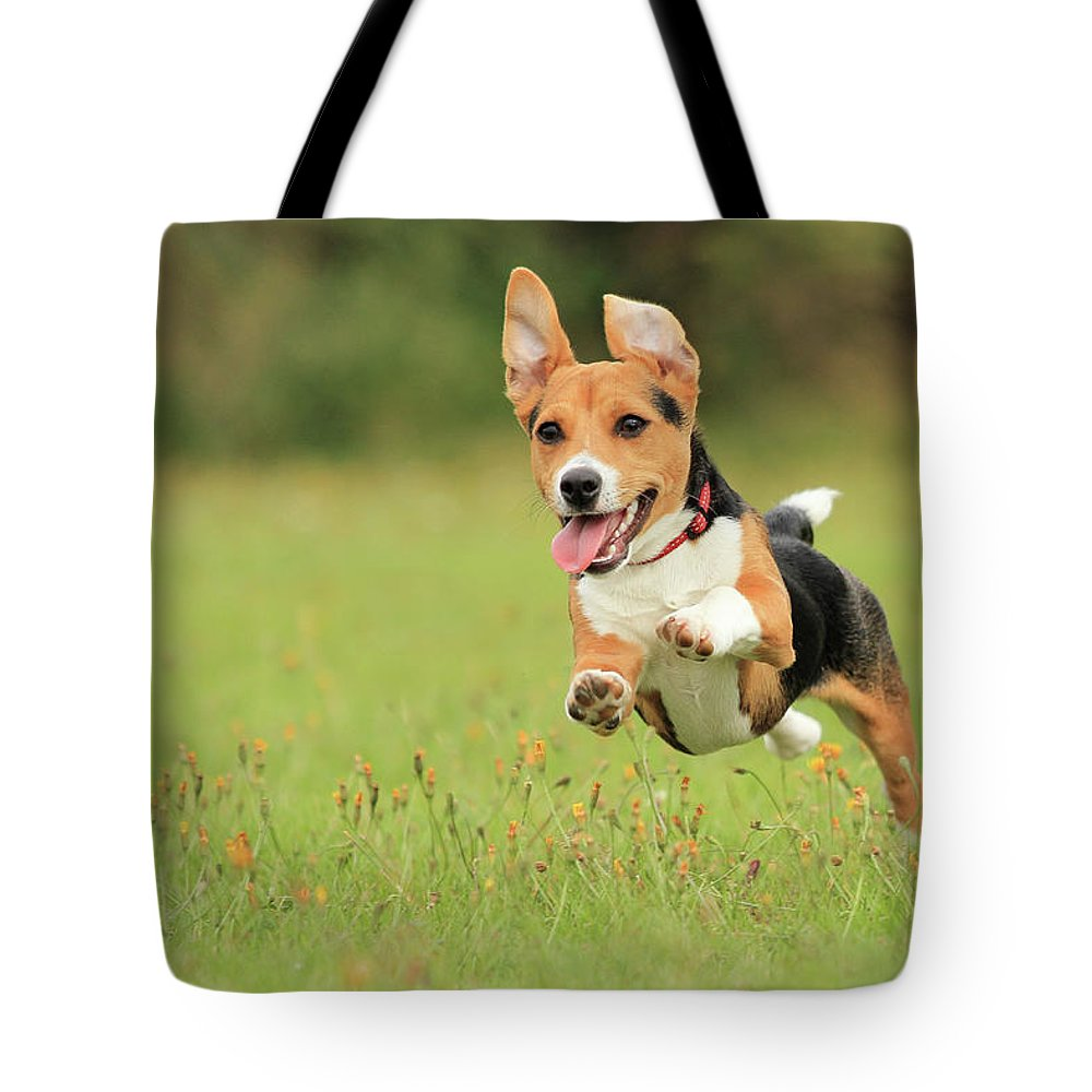 Grass Tote Bag featuring the photograph Puppy by Paul Baggaley