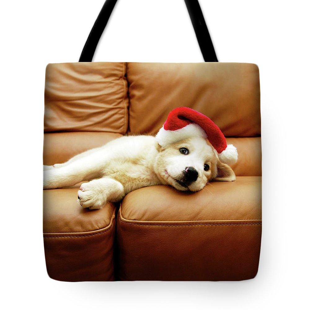 Pets Tote Bag featuring the photograph Puppy Wears A Christmas Hat, Lounges On by Karina Santos