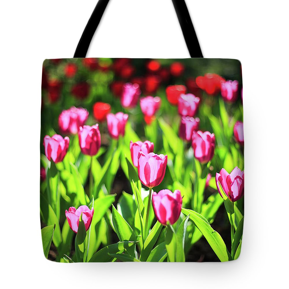 Taiwan Tote Bag featuring the photograph Purple And Red Tulips Under Sun Light by Samyaoo
