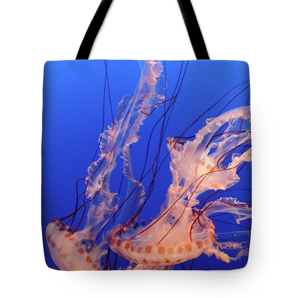 Underwater Tote Bag featuring the photograph Purple-striped Jellyfish Swimming by Rich Lewis