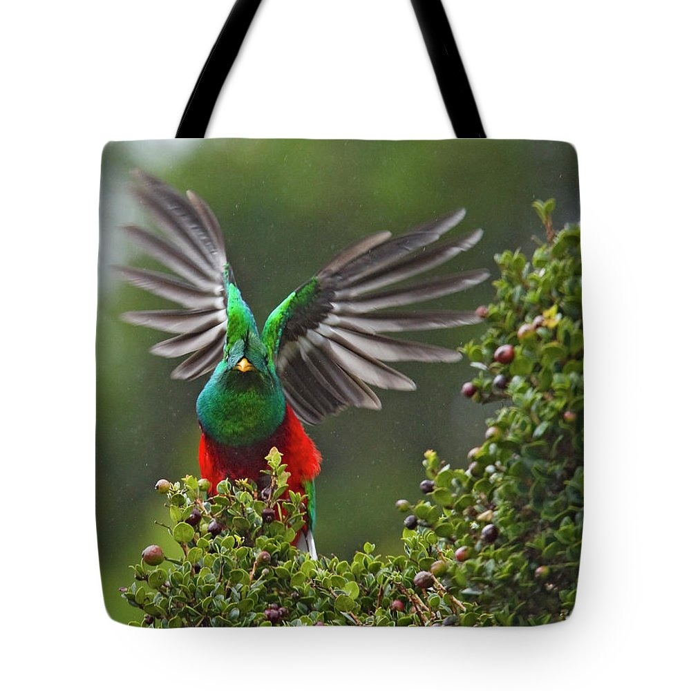 Animal Themes Tote Bag featuring the photograph Quetzal Taking Flight by Photograph Taken By Nicholas James Mccollum