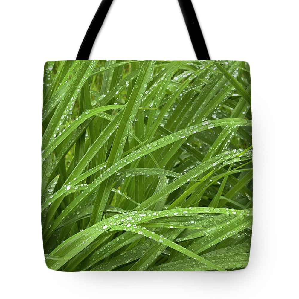 Tranquility Tote Bag featuring the photograph Raindrops Of Daylily Foliage by Adam Jones