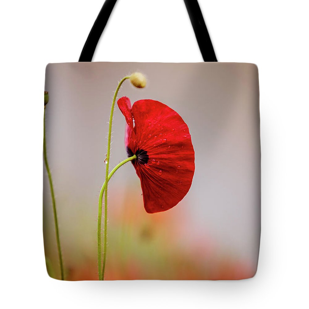 Poppy Tote Bag featuring the photograph Red Corn Poppy Flowers by Nailia Schwarz