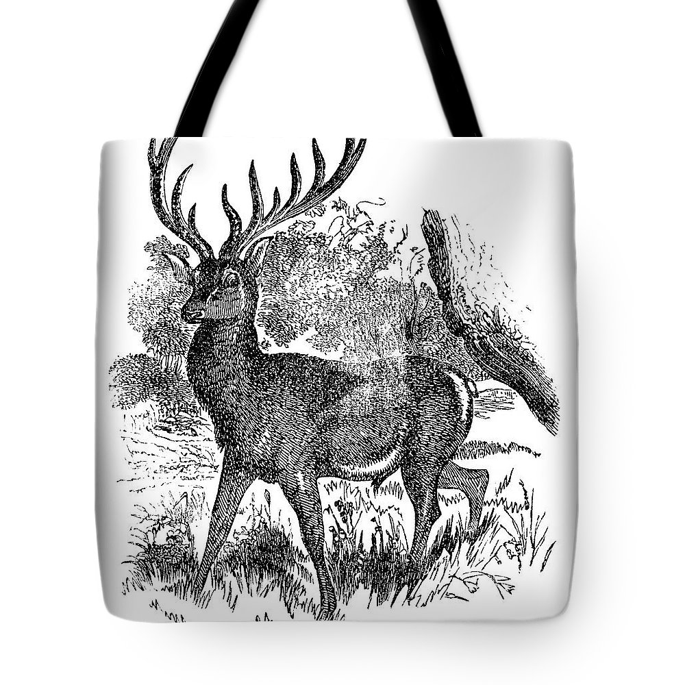 Engraving Tote Bag featuring the digital art Red Deer Stag Engraving by Nnehring