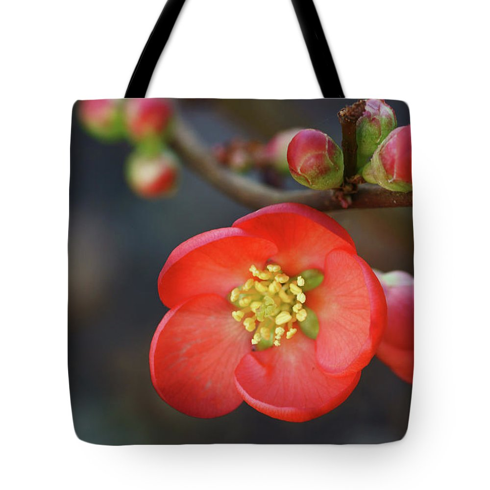 Bud Tote Bag featuring the photograph Red Flowering Quince by Picture By La-ong