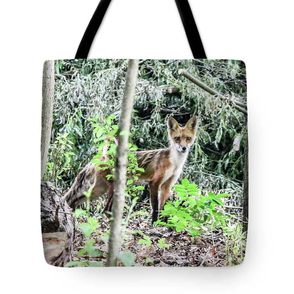 This Is A Photo Of A Red Fox Found In A Woods In Glenn Rock New Jersey. Tote Bag featuring the photograph Red Fox In The Woods by William Rogers