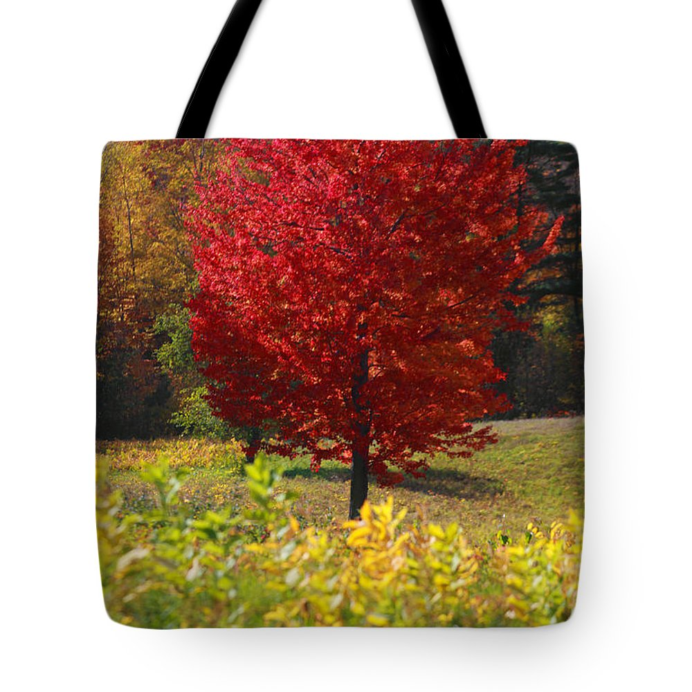 Red Maple Tree Tote Bag featuring the photograph Red Maple Tree by Trevor Slauenwhite