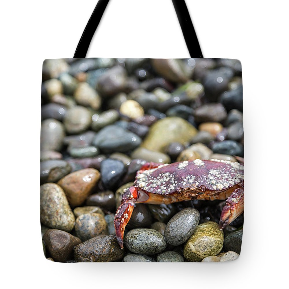 Water's Edge Tote Bag featuring the photograph Red Rock Crab On A Pebble Covered Beach by Stevedf