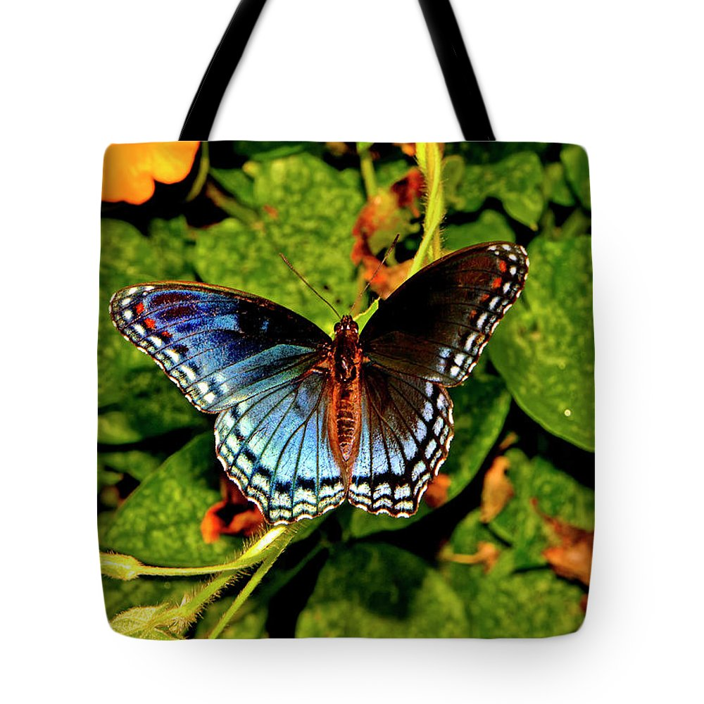 Butterfly Tote Bag featuring the photograph Red-spotted Purple Butterfly 017 by George Bostian