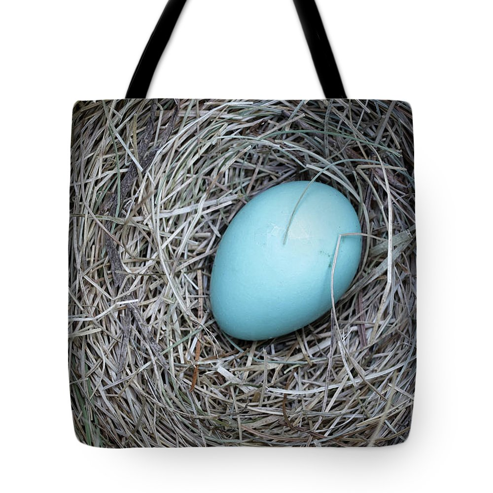 Bird Tote Bag featuring the photograph Robin's Egg by Edward Fielding
