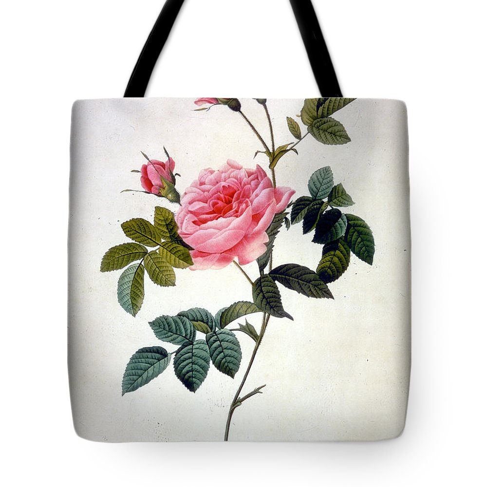 19th Century Tote Bag featuring the mixed media Rosa Inermis by Pierre-Joseph Redoute