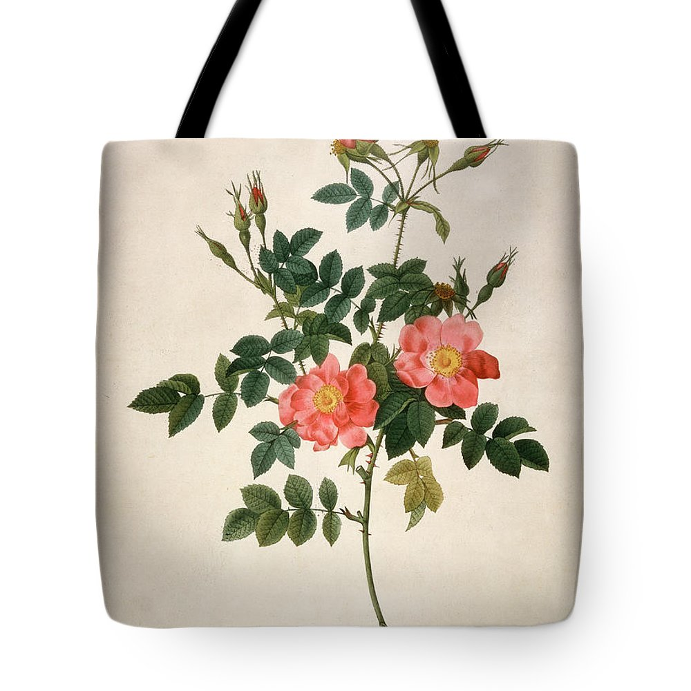 19th Century Tote Bag featuring the mixed media Rosa Rubiginosa by Pierre-Joseph Redoute