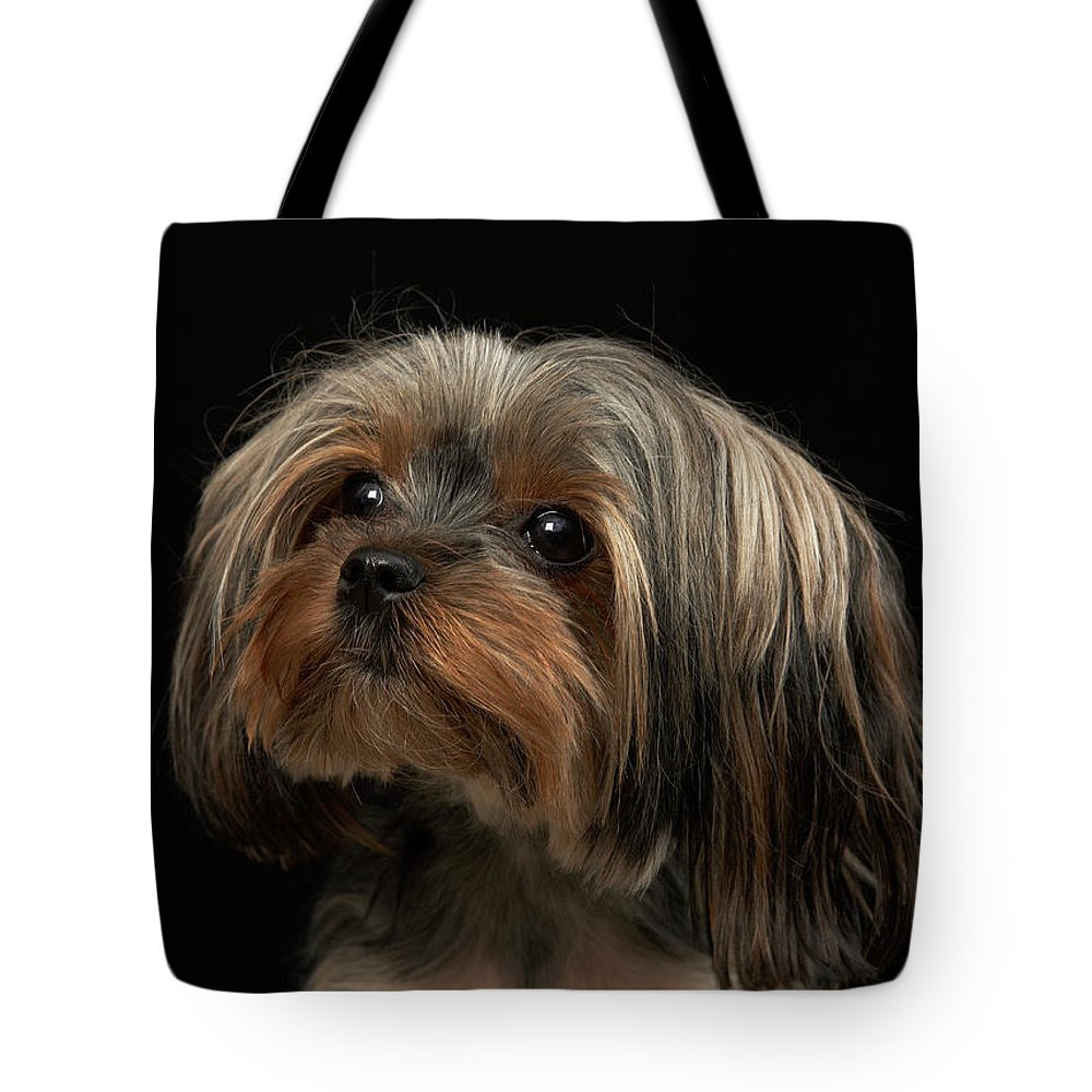 Pets Tote Bag featuring the photograph Sad Yorking Face Looking To The Left by M Photo