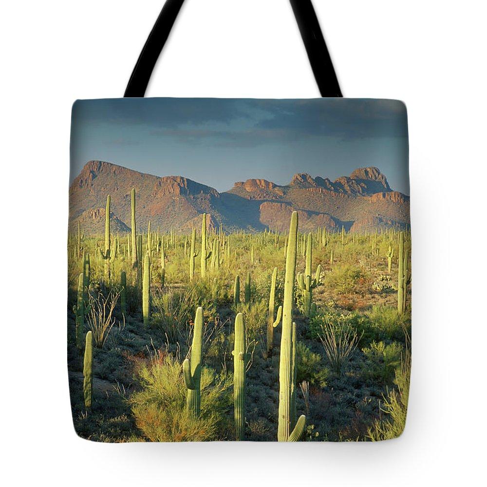 Saguaro Cactus Tote Bag featuring the photograph Saguaro Cactus In Sonoran Desert And by Kencanning