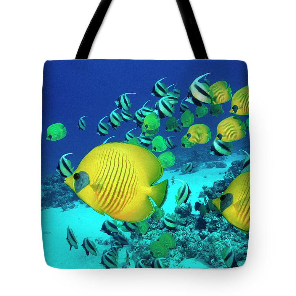 Underwater Tote Bag featuring the photograph School Of Butterfly Fish Swimming On by Georgette Douwma