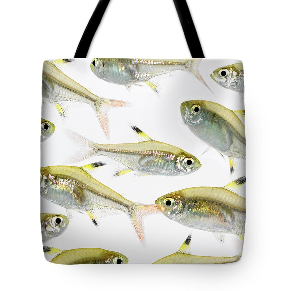 White Background Tote Bag featuring the photograph School Of X-ray Tetra Fish Pristella by Don Farrall