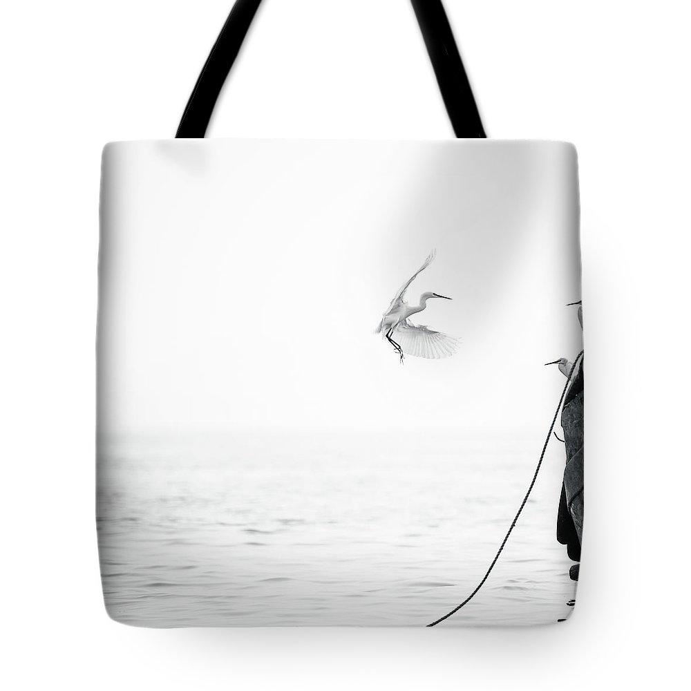 Animal Themes Tote Bag featuring the photograph Sea Birds Of Shekou Shenzhen by Capturing A Second In Life, Copyright Leonardo Correa Luna