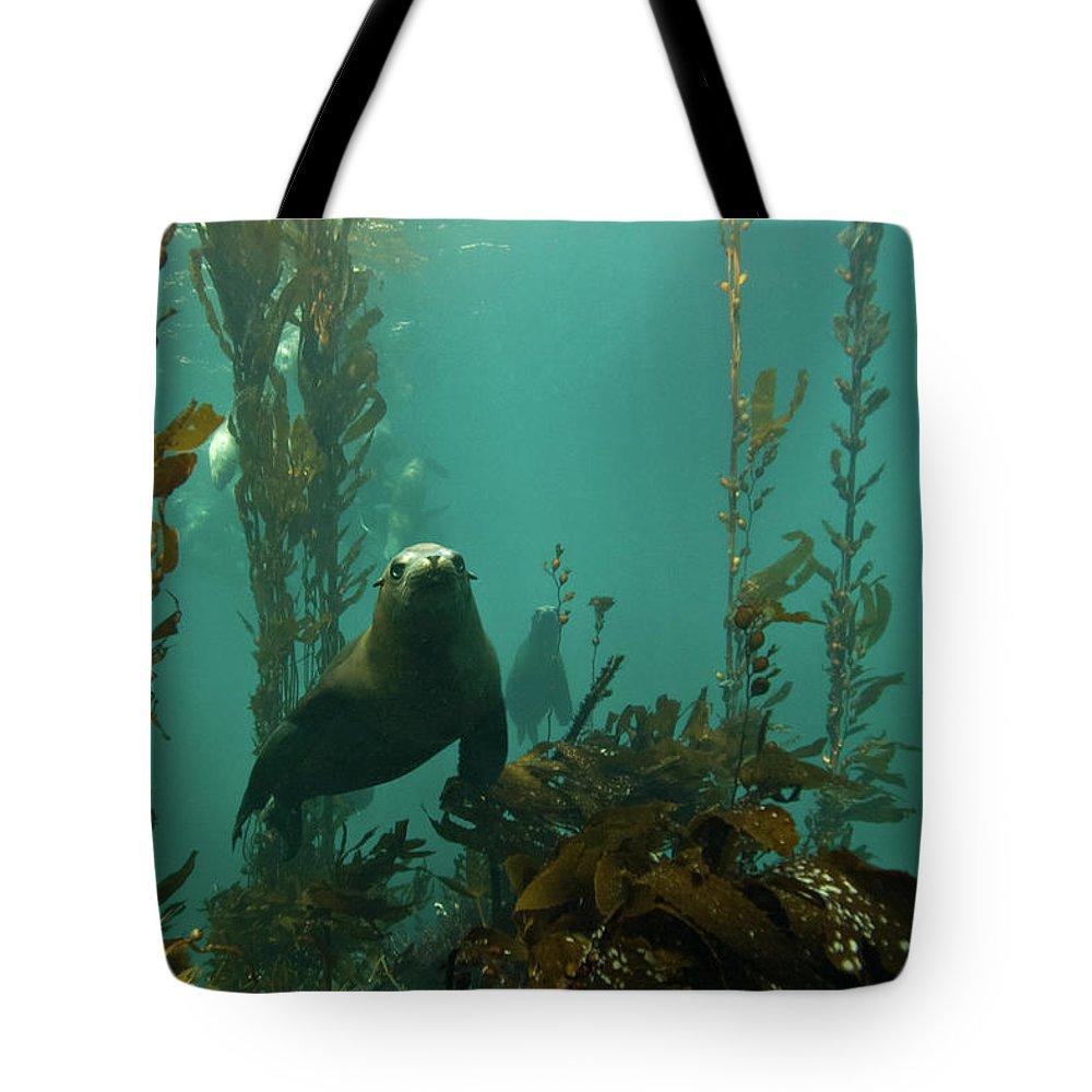 Sea Lion Tote Bag featuring the photograph Sealion by Douglas Klug